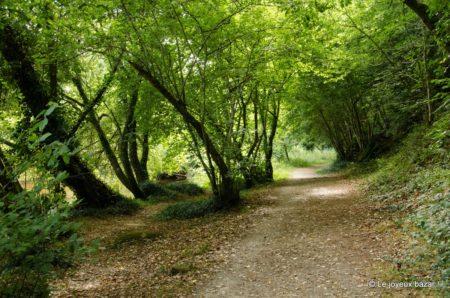 le magnifique lieu romantique pour aimer en finistere le bois d'amour