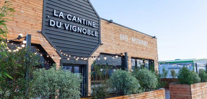 Café restaurant La Cantine du Vignoble
