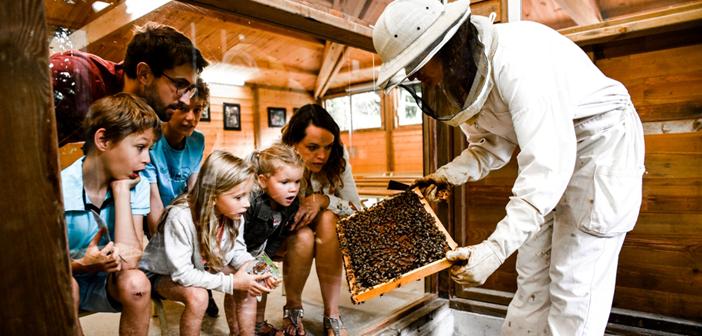 La Folie de Finfarine, site ludique sur le miel et les abeilles à Poiroux en Vendée