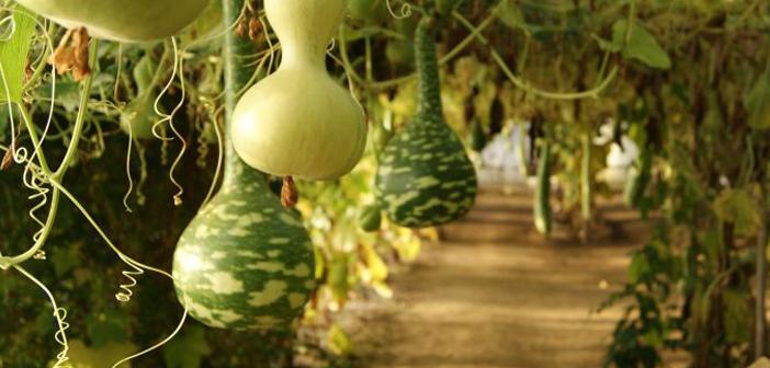 Le Potager Extraordinaire, site végétal pédagogique à La Mothe Achard en Vendée