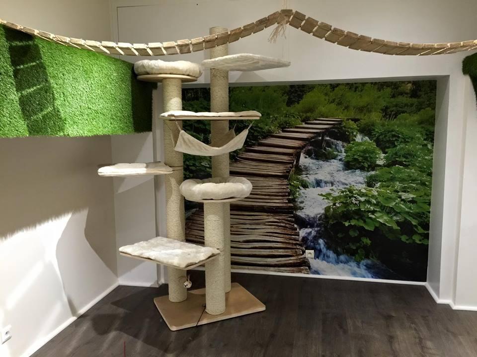 nantes d but encourageant pour les bars chats reso 44. Black Bedroom Furniture Sets. Home Design Ideas